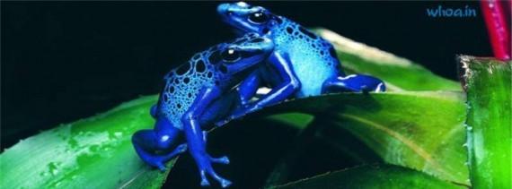 Blue Frog Trademark Infringement